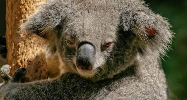 Australian Visitor Visas Simplified